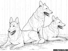 Siberian Husky Coloring Page Coloring pages for Adults