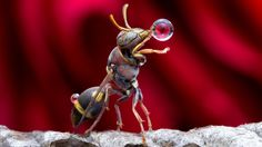 A bug drinking in front of a rose (1260×709)