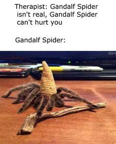 Gandalf Spider #memes #viral #trends #funny #meme #twitch #kappa