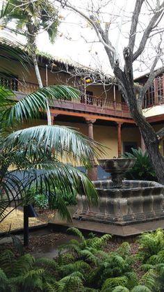 Jardin ( patio canario)