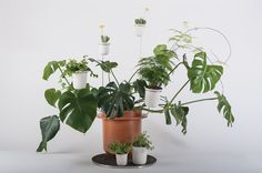 The Phytophiler Flower Pot System: An Inspector Gadget-esque Growing System That Won't Blow Up in your Face - Core77