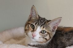 Valentina | Pets Available | PAWS Chicago