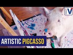 Pigcasso, believed to be the world's only painting pig, lives in Franschhoek and is having her first exhibition at the end of April. The 204 kg animal. Most Expensive Painting, All Gods Creatures, Rescue Dogs, Pet Care, Dog Cat, Make It Yourself, Pets, Artist, Fun
