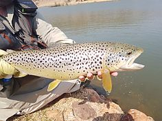 Fly Fishing Trips. Johannesburg Adventures | Must do activities | Things to do | Urban Adventures - Dirty Boots