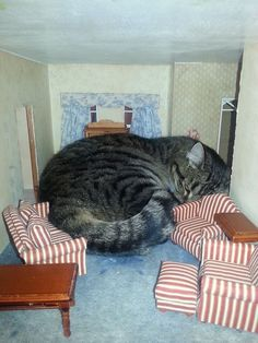 Cat in child's dollhouse. How adorbs is this?