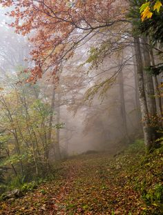 Misty Bavaria - Thick mist hanging across the path to Kleiner Traithen. It gave…