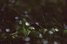 Little forest stars on Behance