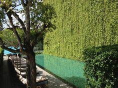 Green Wall   Foto De 137 Pillars House : Beautiful Green Wall Next To The  Pool