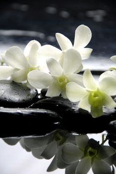 Zen Stones And Branch White Orchids With Reflection Stretched Canvas Print by crystalfoto at Art.com