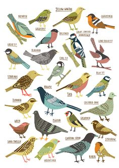 Kate Sutton Illustration | British Garden Birds