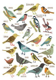 Kate Sutton Illustration | British Garden Birds