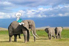 Wilde Tiere, unzähmbarer Dschungel, tiefe Schluchten, heiße Wüsten - nichts für Kinder? Im Gegenteil, diese gemeinsam erlebten Herzklopfmomente bleiben ein Leben lang in Erinnerung. Bei DIAMIR Erlebnisreisen steht Familien eine Auswahl empfehlenswerter Reisen zur Verfügung, bei denen Erlebnisse wie gemeinsame Pirschfahrten in Safarifahrzeugen auf der Suche nach Zebra, Löwe & Co. Foto: © Diamir Erlebnisreisen