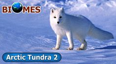 Biomes - Artic Tundra And Polar Dessert - Part 2 - Kids Learning Made Fun