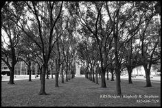 Trees at Williams Water Wall
