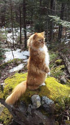 Standing~ Kitty