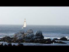 Live Monterey Bay Cam - Monterey Bay Aquarium - YouTube