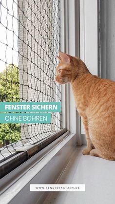 Wie du eine kostengünstige und langlebige Fenstersicherung für Katzen ganz leicht selber bauen kannst, erfährst du in dieser einfachen Schritt-für-Schritt Anleitung. Und dass, ohne bohren zu müssen, ohne das Fenster deiner Mietwohnung zu beschädigen und ohne über handwerkliches Talent zu verfügen. DIY | Fenster sichern Katze | Fenster katzensicher machen | Katzennetz Fenster ohne bohren | Spannrahmen Fenster Katzen | Katzengitter | Fensternetz Katze #diy #katzendiy #diykatzen #selbermachen Living With Cats, Kitty, Animals, Step By Step Instructions, Make Your Own, Ideas, Little Kitty, Animales, Animaux