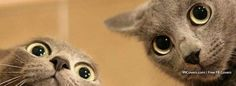 Cats Facebook Covers