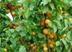 Capcană eco pentru coropişniţe | Paradis Verde Paradis, Ale, Pumpkin, Stuffed Peppers, Fruit, Vegetables, Outdoor, Food, Agriculture