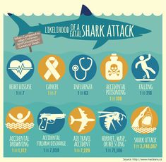 For decades, the human fear of sharks has transcended logic and statistics.