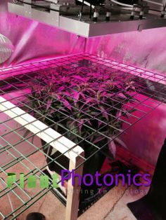 Plants growing under our led grow lights.