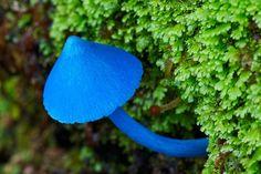 22 Trippy Magical Mushrooms - Gallery