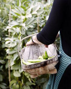 Things that make me smile...harvesting fresh veggies or fruits, especially using an old wicker basket. Refreshing. Renewing. Spiritual.