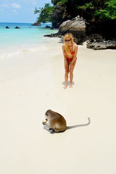 monkey beach, macaques, thailand, island, island hopping, white sand, asia, travel, south east asia, boat,