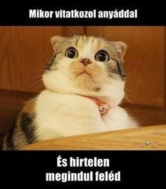Latest viral funny animal pictures memes of the day. Check these top 52 latest funny animal pictures you should see Funny Cat Memes, Funny Cats, Funny Animals, Hilarious, Funny Quotes, Very Funny Pictures, Funny Animal Pictures, Body Time, Cat Noises