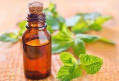 Cómo extraer aceite de las hojas de menta