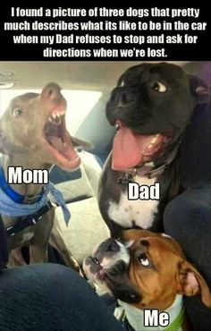 22 Funny Animal Pictures for Today - Humor bilder - Animals Funny Animal Jokes, Really Funny Memes, Stupid Funny Memes, Cute Funny Animals, Funny Relatable Memes, Haha Funny, Funny Cute, Funny Dogs, Funny Stuff