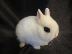 Emily's Hoppin' Hotots: Basic Bunny Care 101 Part A