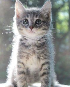 Precious little fur baby!!❤❤