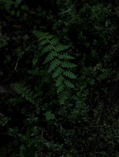 Find images and videos about forest and fern on We Heart It - the app to get lost in what you love. Caleb, Lost In The Woods, Ivy Plants, Pictures Of People, Dark Forest, Medieval Fantasy, Green Life, Poison Ivy, Botanical Prints