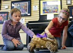 Lucy the Tortoise stars in children's book after Boulder County escapade