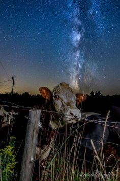 Skywatcher Stephen Ippolito captured this image of the Milky Way over some friendly cows was taken in New Hampshire on Sept. 11, 2015.