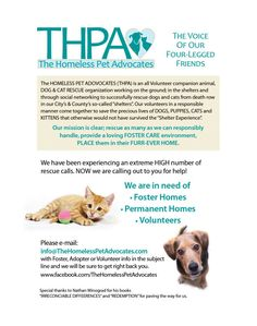 THPA - THE HOMELESS PET ADVOCATES - VOLUNTEER GRP LOCATED IN FLORIDA - NEEDS $ AND FOSTER HOMES - ADOPTERS