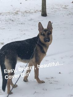 My puppies first snow! Meet Leyna; my little angel. Shes a 9 month old 80lbs puppy that Ive had since she was only 9 weeks old. She has a heart of gold and universally loves animals and people alike. Never seen her harm anything or even try to. Shes my first dog trained her myself too! http://ift.tt/2Dofqrh