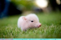 So cute! I want one so I can dress him up in teeny tiny rain boots!!! Also I would name him Ham Sandwich