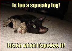 awwww poor kitty XD