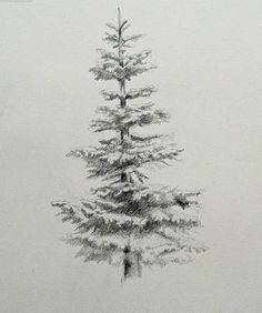 Image result for fir tree drawing
