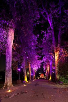 Parc de l'Orangerie_Strasbourg Colors at Entry, Tree Uplight