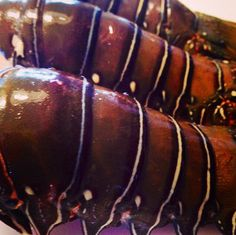 Fresh Lobster Tails for Lobster Paella Empanadas