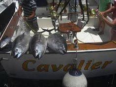 sharks gran canaria cavalier - Google zoeken