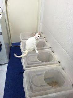 Dica de Banheiro Pet