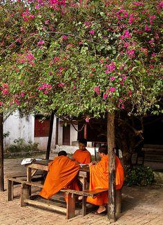 Study at the temple Luang Prabang, Laos