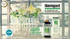 Iberogast combina nueve estractos de plantas que alivian múltiples problemas digestivos como: náuseas, cólicos, hinchazón, dolor, gases... #Iberogast, el poder de las plantas en acción, para cuidar nuestra salud digestiva.