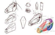 Animal Anatomy with Jonathan Kuo