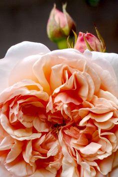http://www.robertmealing.com/wp-content/gallery/my-garden/garden46.jpg