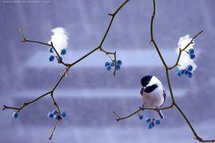 lovely blues..